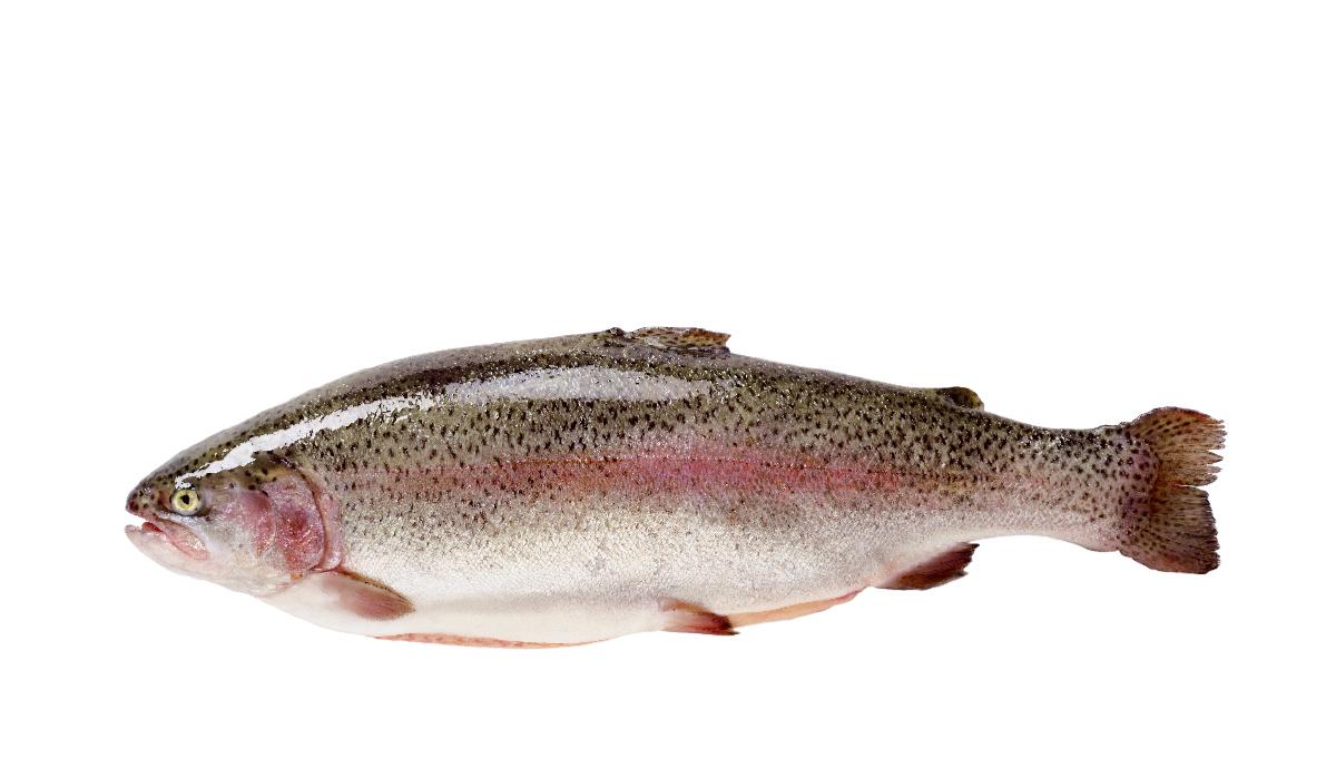 Trout whole
